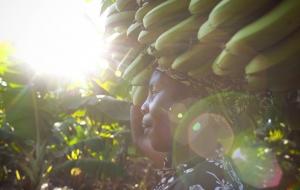 잠비아에서 희망을 수확하다