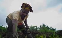 라이베리아 쌀 재배 프로젝트