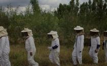 에티오피아 양봉사업