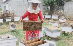 꿀이 가져다 주는 달콤하고 영양 가득한 네팔 양봉 이야기